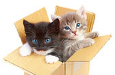 Kittens in box — Stock Photo
