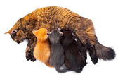 Ma with kittens — Stock Photo