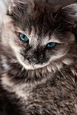Cat — Stock fotografie