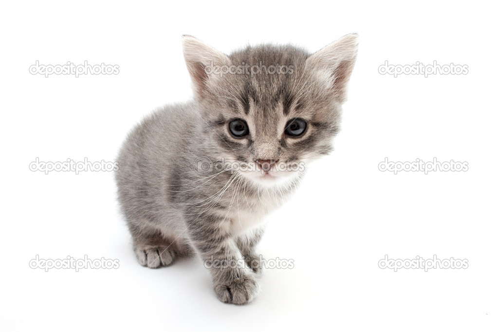 Kitten isolated on white background — Stock Photo #2995743