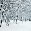 Nature in winter - Stock Photo