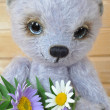 Chupa with a bouquet - Stock Photo