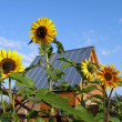 Summer residence and sunflowers — Stock Photo