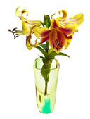 Lily in a glass vase — Stock Photo