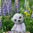 Teddy bear Chupa among flowers — Stock Photo