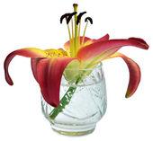 Lily bloem in een kristalglas — Stockfoto