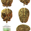 3D Human Brain — Stock Photo