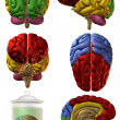 3D Human Brain - Stock Photo