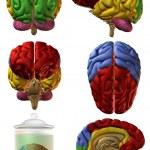 3D Human Brain — Stock Photo