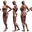 Female Human Body Anatomy — Foto de Stock