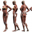 Female Human Body Anatomy — Stock Photo