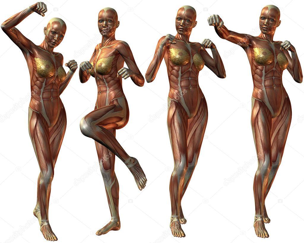 女性人体的 3d 呈现器