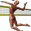 Female Anatomic Body - Volleyball — Stock Photo #2864724