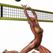 Female Anatomic Body - Volleyball — Stock Photo #2864735