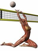 Female Anatomic Body - Volleyball — Stock Photo