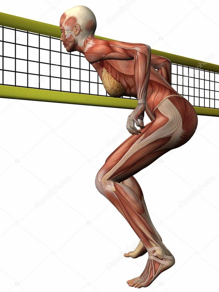 女性解剖尸体 排球