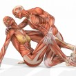 Female and Male Anatomic Body - Couple — Stock Photo #2884732
