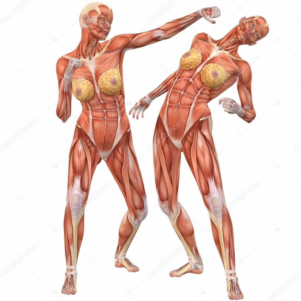 Women human anatomy