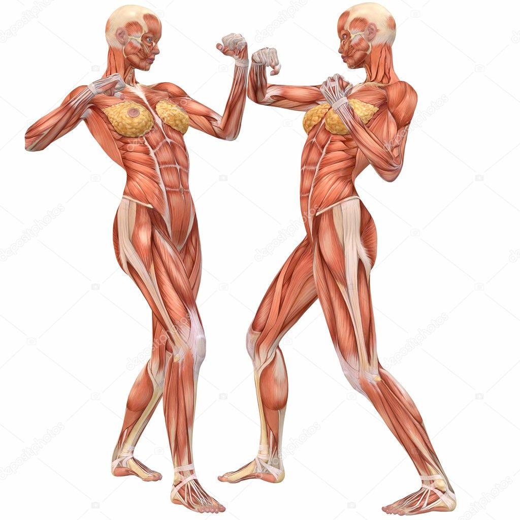 Body anatomy woman