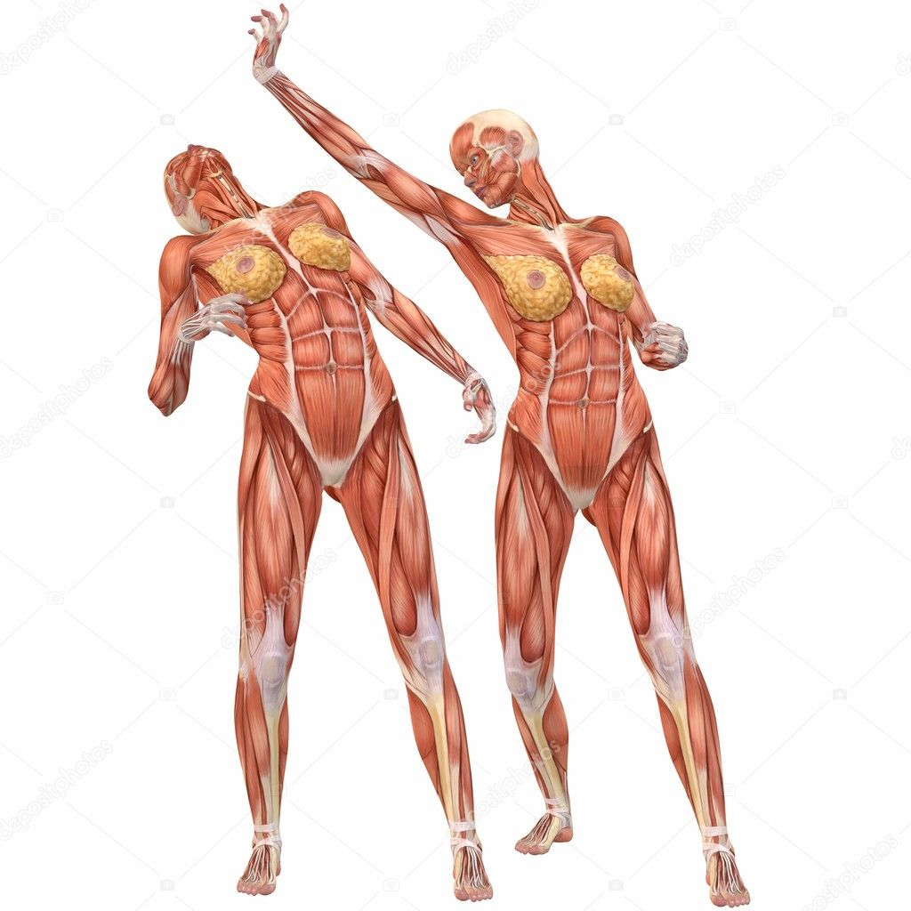 Human woman anatomy