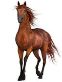Beautiful Horse — Stock Photo