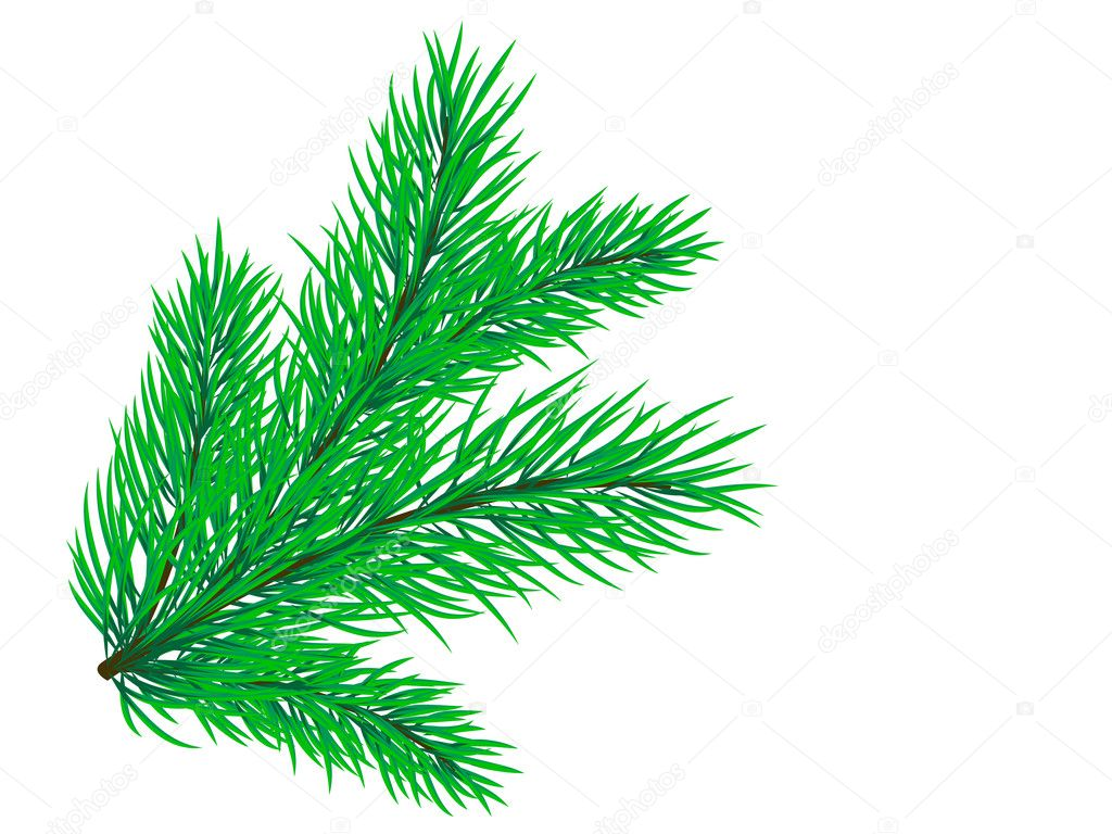 Beautiful pine branch on a white background  Stock Vector #3246538