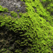 Stock Photo: Moss on rock