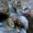 Water movement on the stone — Stock Photo