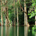 Trees on lake — Stock Photo #2785386