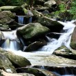 Water spring in forest — Stock Photo #2785474