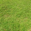Green grass background — Foto Stock #2881508