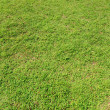 Green grass background — Stock Photo #2881508