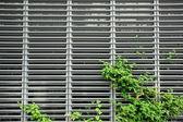 Fond métallique avec quelques plantes — Photo
