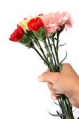 Clavel, flor de sujetar con la mano — Foto de Stock