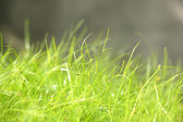 Grass in morning — Stockfoto
