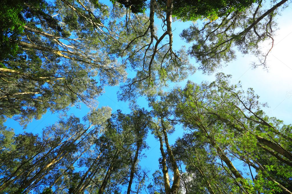 Virginia Urban Tree Canopy Analysis - Virginia Geospatial