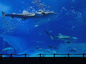Aquarium tank with whale shark — Stock Photo