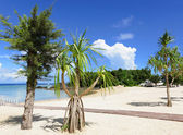 Beach of okinawa — Stock Photo