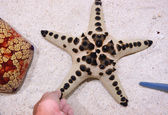 Touch star fish — Stock Photo