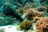 Coral in sea — Zdjęcie stockowe