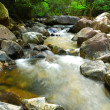Water spring in jungle — Stock Photo #3683019