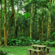 Picnic place in forest - Stock Photo