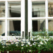 Royalty-Free Stock Photo: Windows with white  flowers