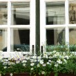Windows with white flowers — Stock Photo
