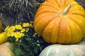 The big pumpkin — Stock Photo