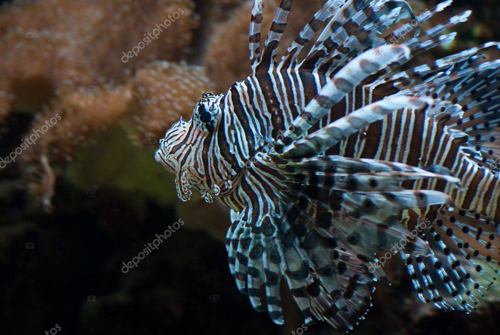 seltene exotische gro en aquarienfische unter wasser