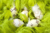 Easter eggs in green feathers — Stock Photo