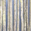 Stock Photo: Rotten wattle fence