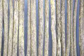 Rotten wattle fence — Stock Photo