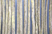 Rotten wattle fence — Stock Photo